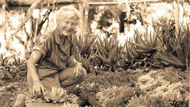 Algunas plantas suculentas del Jardín de Ruth Bancroft