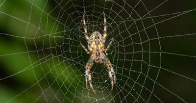 मकड़ी अपने जाल में खुद क्यों नहीं चिपकती ?