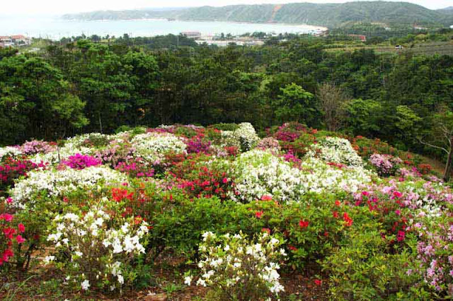 flowers, ocean, mountains, Higashi-son, festival