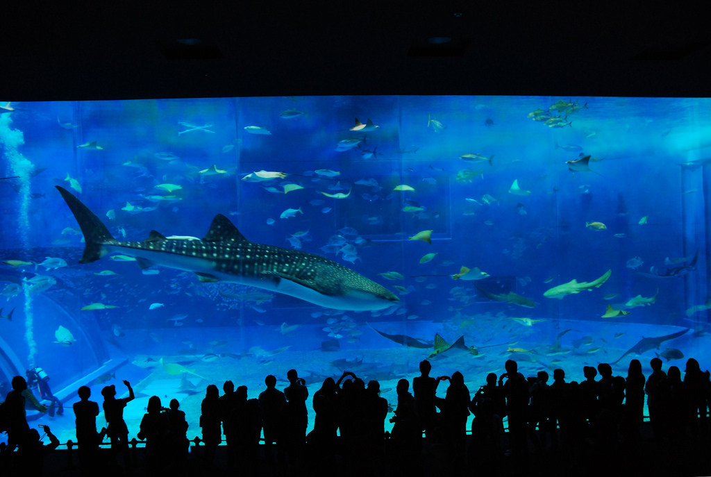 Huge aquarium