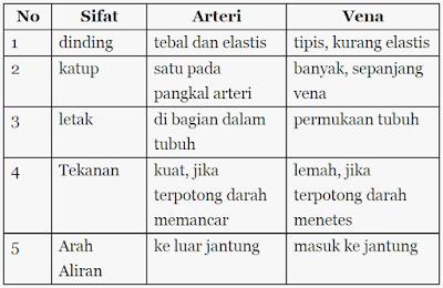 Perbedaan pembuluh vena dengan pembuluh arteri