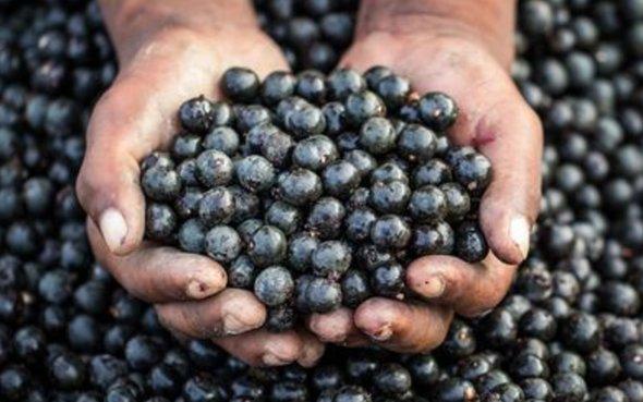 beneficiile fructului Maqui