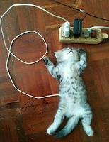 Anak Kucing Menggemaskan Tidur