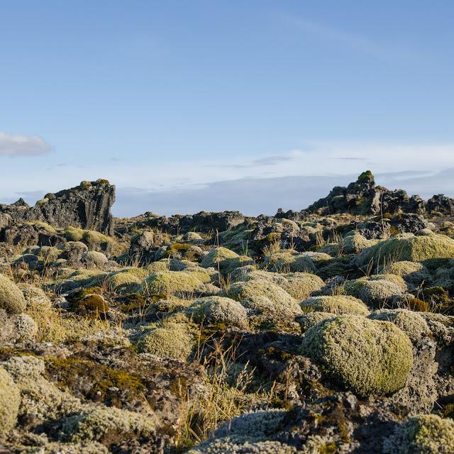 Islandia. droga, podróż, pola mchu, mech