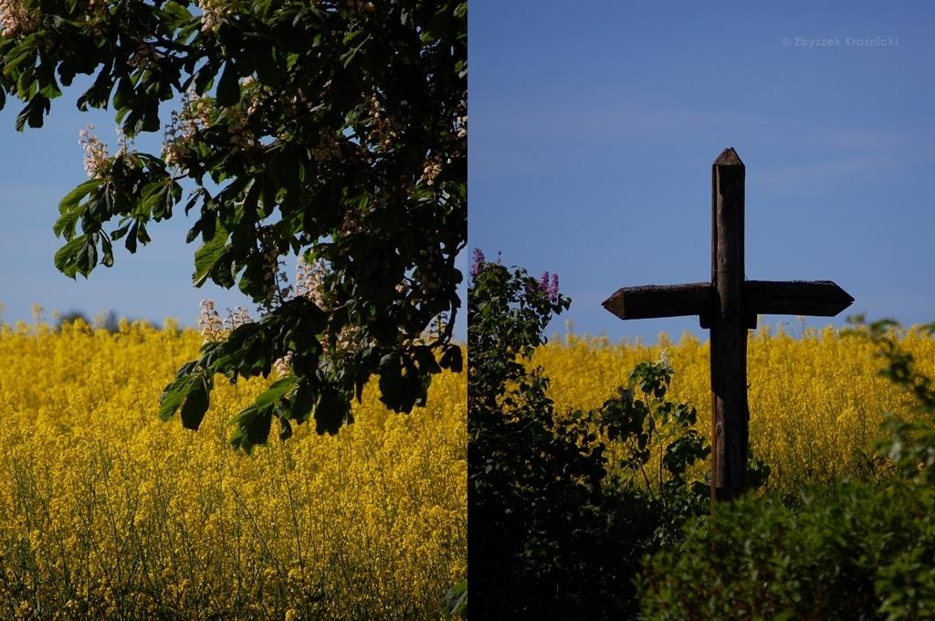 Jesionowo | Kościół pw. św. Marcina i wiosna w tym roku rozpieszcza