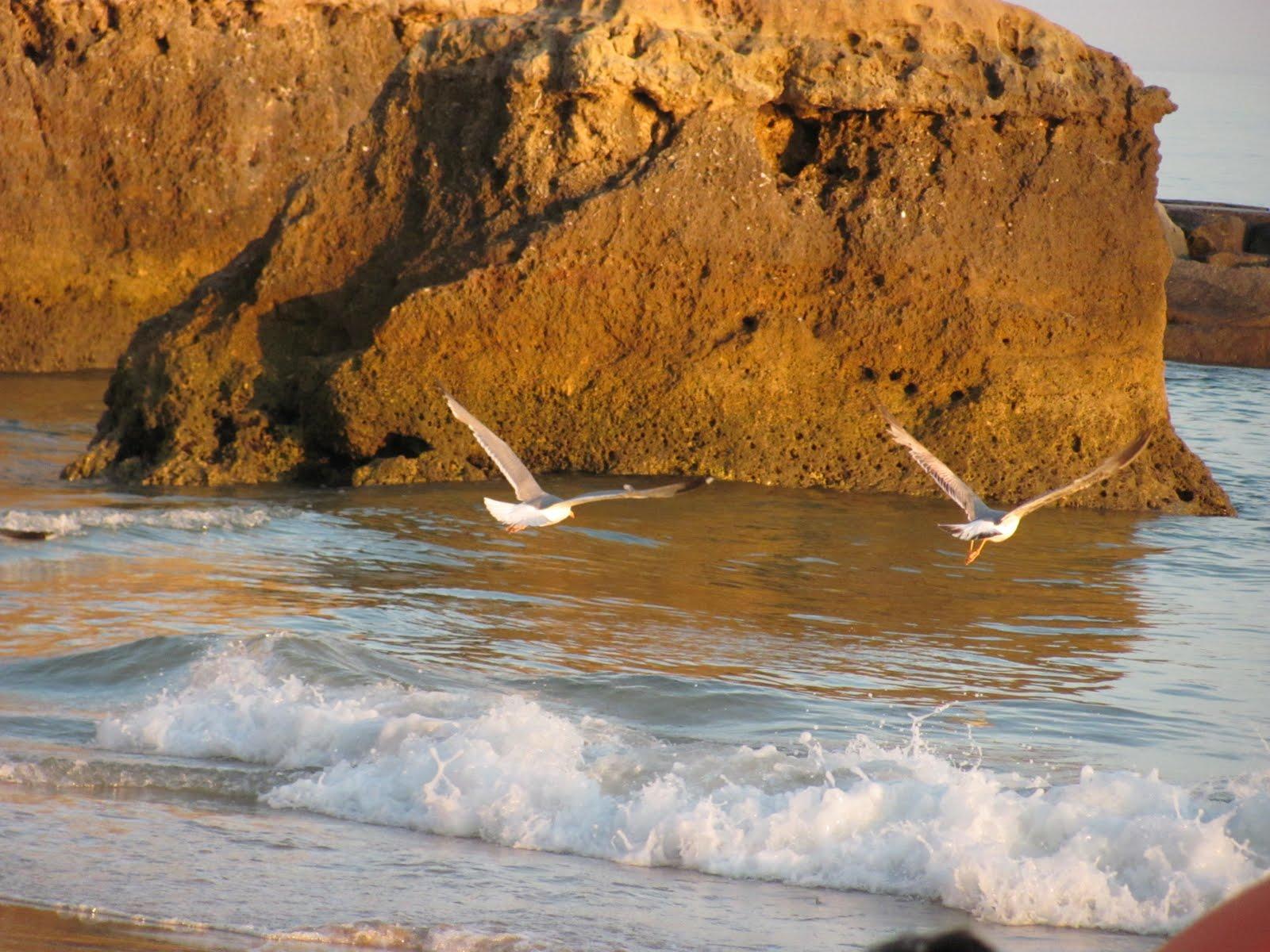 """Homenagem ao  poeta do mar  """"Transversal"""" juntamente com a sua aprendiz …"""