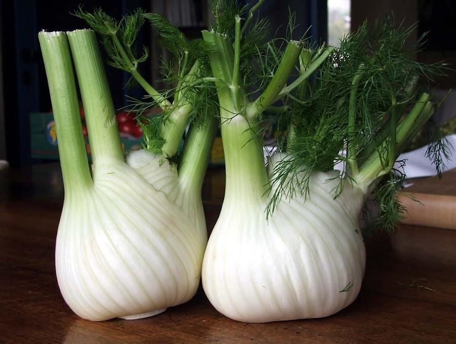 Cómo cultivar hinojo
