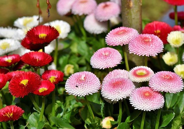 hinh anh dep hoa cuc