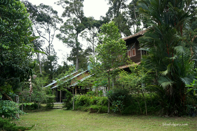 Nature Fruit Farm Resort Balik Pulau