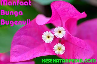 Manfaat Bunga Bugenvil