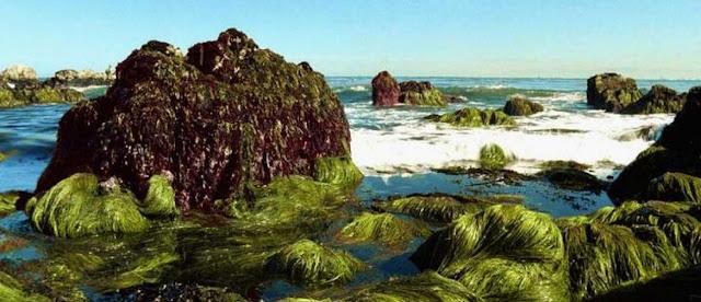Algas y mar