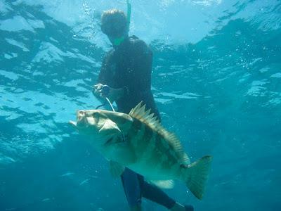 ψάρεμα ροφών
