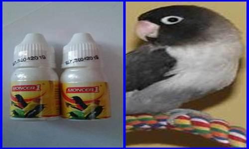 http://miefbird.blogspot.com/2017/03/daftar-harga-vitamin-burung-lovebird.ht