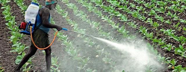 अवैध कीटकनाशके, खतविक्री विरोधात कृषी आयुक्तालयाची राज्यभर कार्यवाही