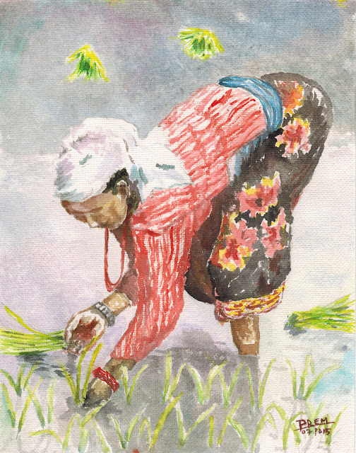Watercolor Painting Portraying Paddy Plantation
