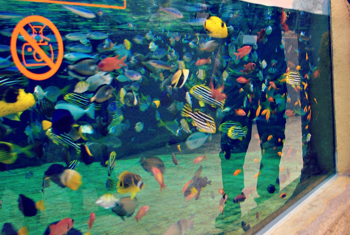 karmienie ryb z biotopu Morza Czerwonego