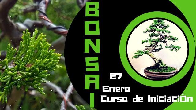 cursos de bonsai
