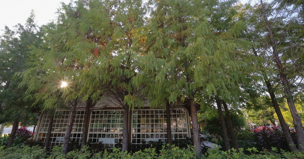 台中北屯|蝴蝶橋法式餐廳-園區內上百棵落羽松,免費入園欣賞