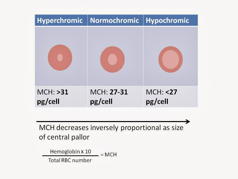 Haematology in a NutShell: Red Cell Indices