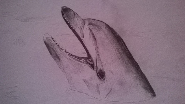 Drawing of a Dolphin by Ellis Derkx