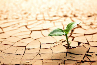 exemplos de resiliencia