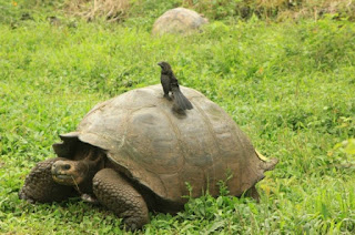 Special Law for the Conservation and Sustainable Use of the Galápagos