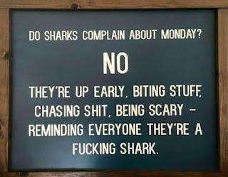 Gambar Gambar Lucu Motivasi Bahasa Inggris Be Shark on Monday