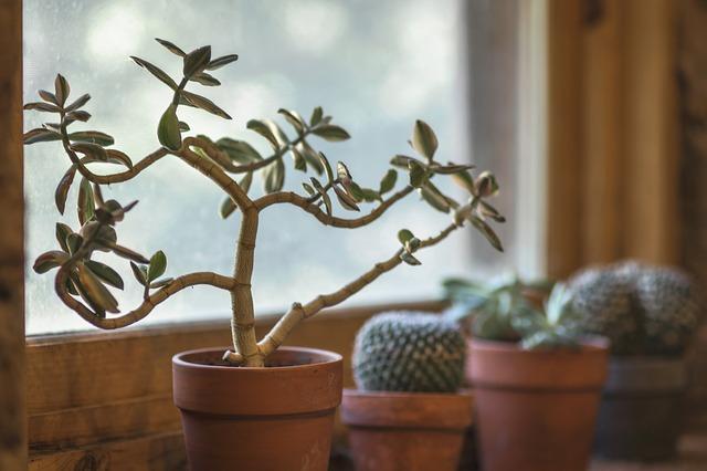 Menata Rumah Minimalis Agar Lebih Ramah Lingkungan