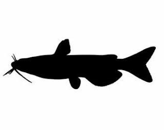 Mengenal Jenis Ikan Lele