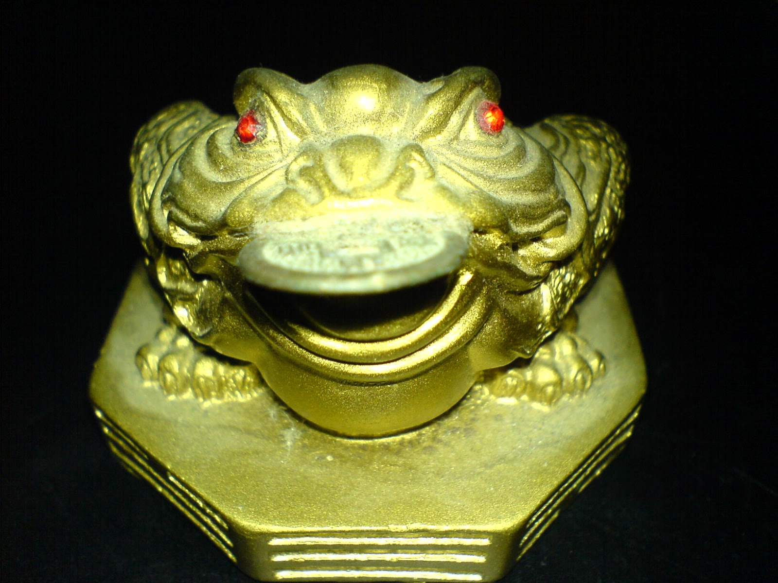 Just watching the wheels go round the red eyed green tree frog i was thinking of getting rid of this feng shui lucky toad that ive had for years near where i keep my wallet but i was reading a book called biocorpaavc Images