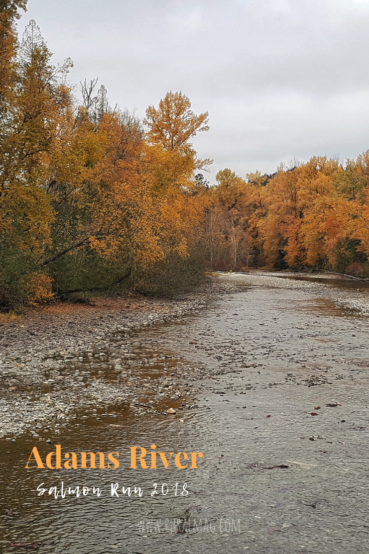 Adams River Salmon Run image of river bed and Autumn trees