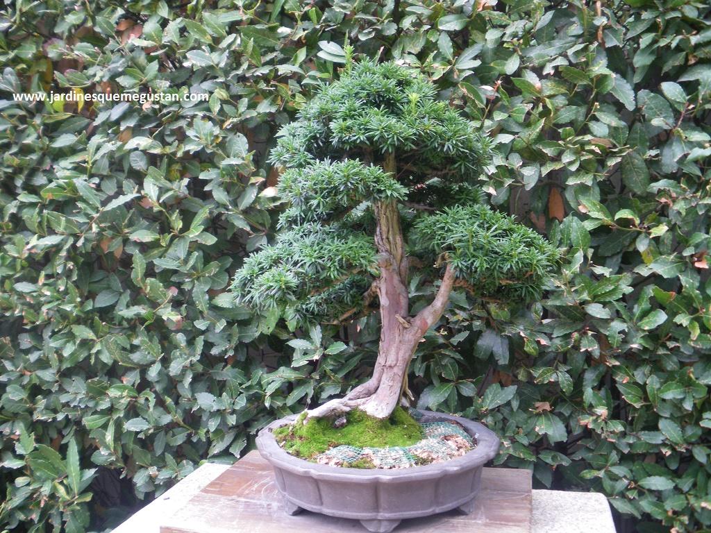 Jardines que me gustan fuego agua tierra tiempo y vac o el arte del bons i - Cultivo del bonsai ...