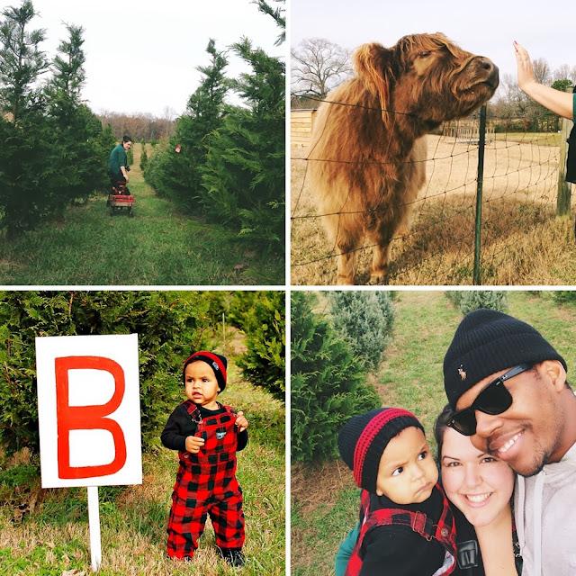 Christmas Tree Farms In North Georgia: Love, Joleen: Thompson Tree Farm