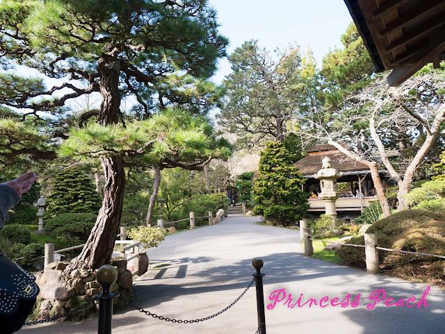 Tea-Garden-日本茶園