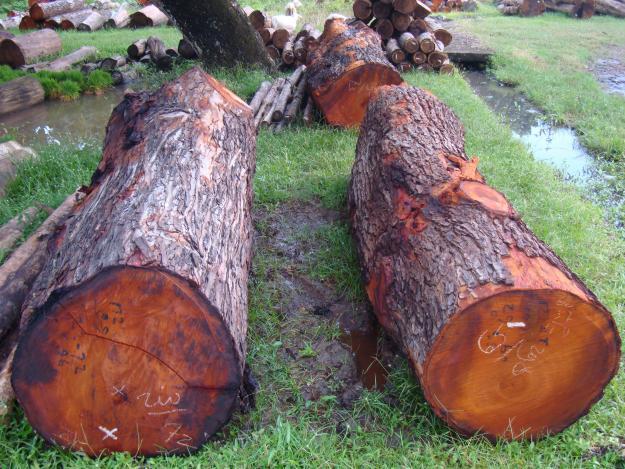 Log kayu mahoni