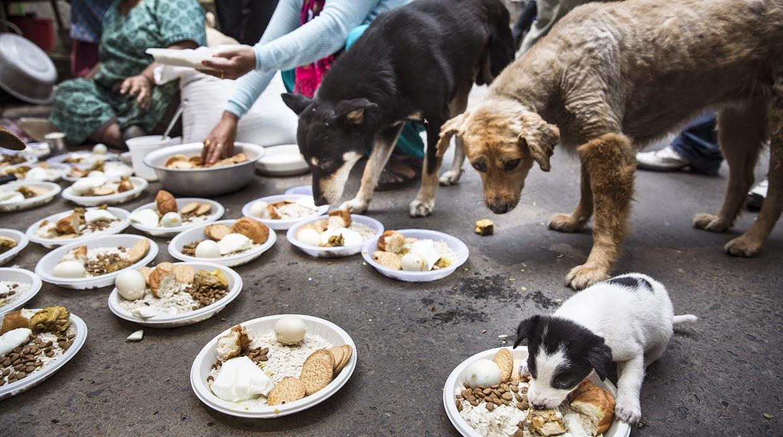 Resultado de imagen para chilenos amor por los perros callejeros