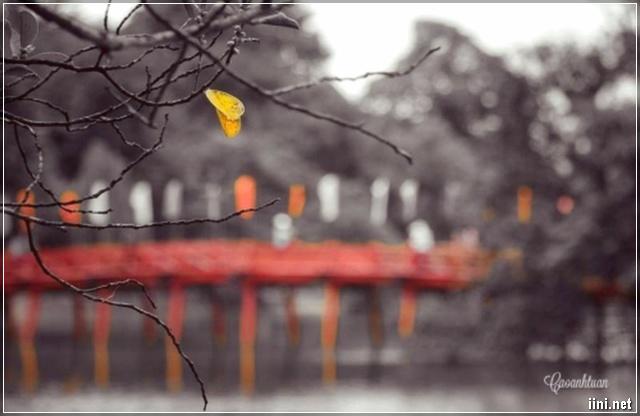 Mùa Thu bên cầu Thê Húc - Hà Nội
