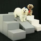 escadas para cães pequenos