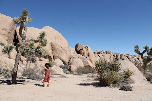 Postcards from Joshua Tree National Park