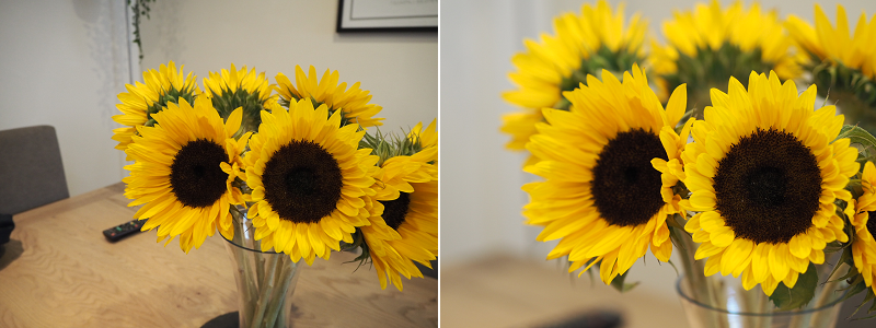 Sunflowers - Olympus pen kit lens vs 45mm lens