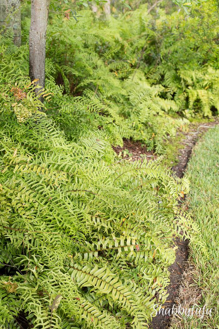 tropical miami garden ferns