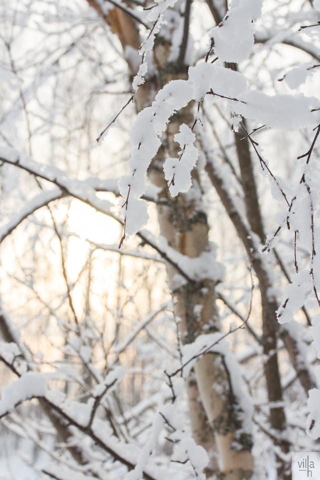 auringonpaiste, nature, suomen luonto, pakkaspäivä