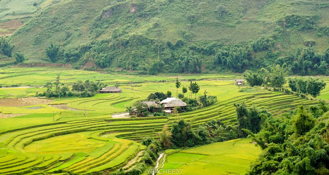 Mu Cang Chai in the summer 10