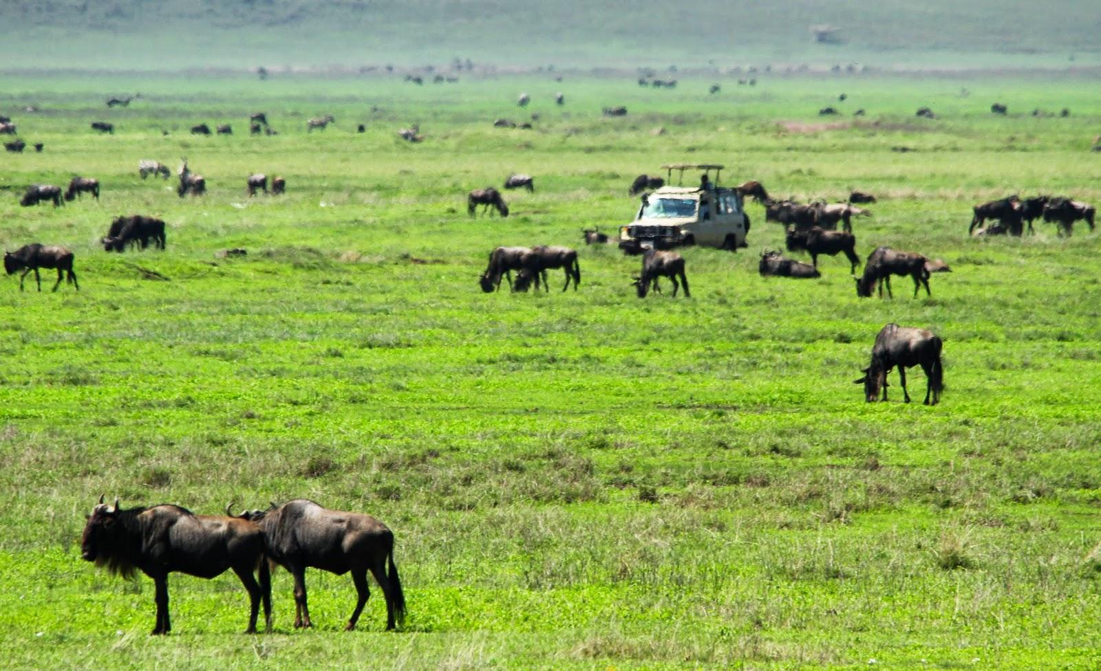 Visitar a CRATERA DE NGORONGORO - Um mundo perdido no século XXI | Tanzânia