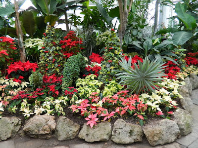 Massed poinsettias and succulent topiaries at the  2018 Allan Gardens Conservatory Winter Flower Show by garden muses--not another Toronto gardening blog