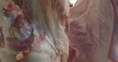 تموين ميت غمر يضبط لحوم بقرى وجاموس مذبوحة خارج السلخانة
