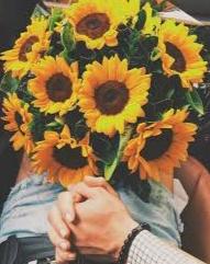 Gambar keren bunga matahari