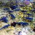 Ikan Dewa yang Dikeramatkan di Kolam Renang Cigugur Kuningan
