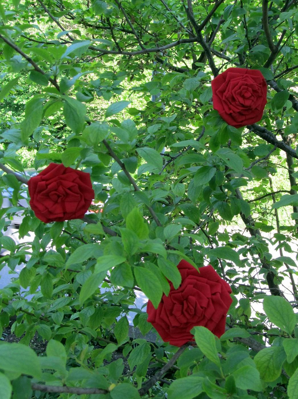 nachbarzwergs stoffgarten eine rose ist eine rose. Black Bedroom Furniture Sets. Home Design Ideas
