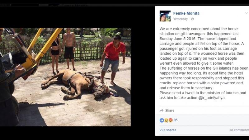 Kuda di Gili Trawangan yang pingsan di tengah jalan